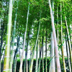 Tokyo Bamboo forest travel guide Senzokuike Myofuku ji temple