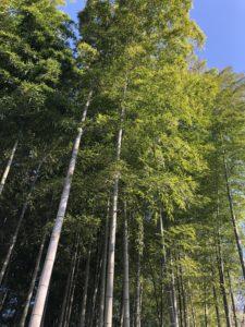 Tokyo Bamboo forest guide Roka Koshu-en gardens
