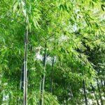 Tokyo bamboo forest Travel guide hidden spots
