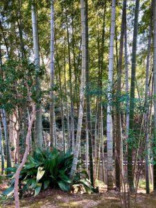 Tokyo Bamboo forest travel guide Todoroki Keikoku