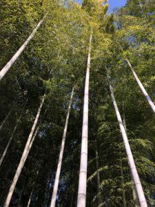 Tokyo Bamboo forest travel guide Roka Koshu-en Gardens