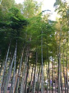 Tokyo bamboo forest travel guide Suzume-no-yado Ryokuchi park