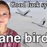 YouTube video crane bird